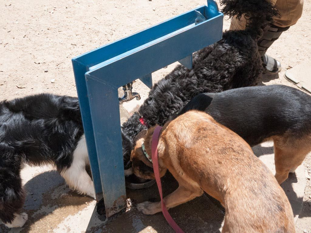 Dogs Drinking Water Fountains Drinking water fountain
