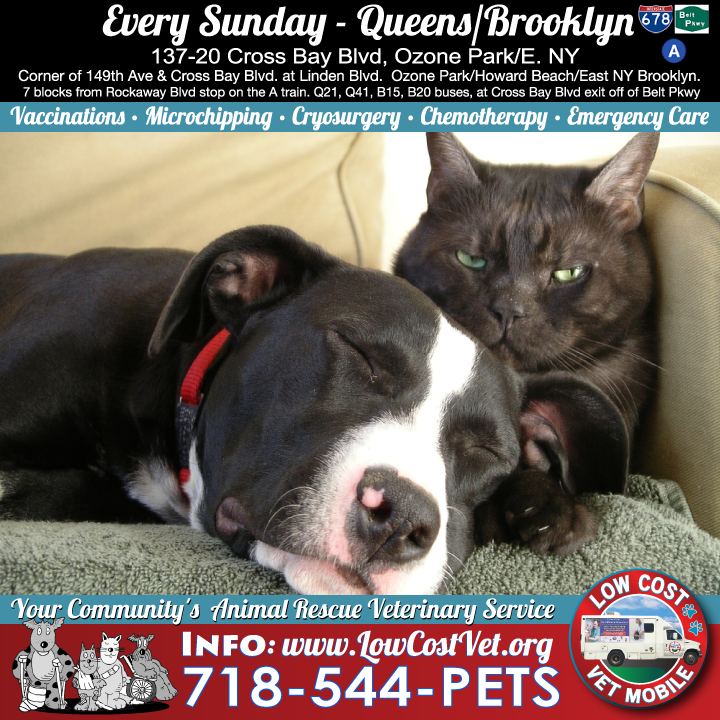 Every Sunday The Low Cost Vet Mobile Is In Our Brooklyn Queens Location Corner Of 149th Ave Cross Bay Blvd At Linden B Veterinary Services Vets Pet Parent