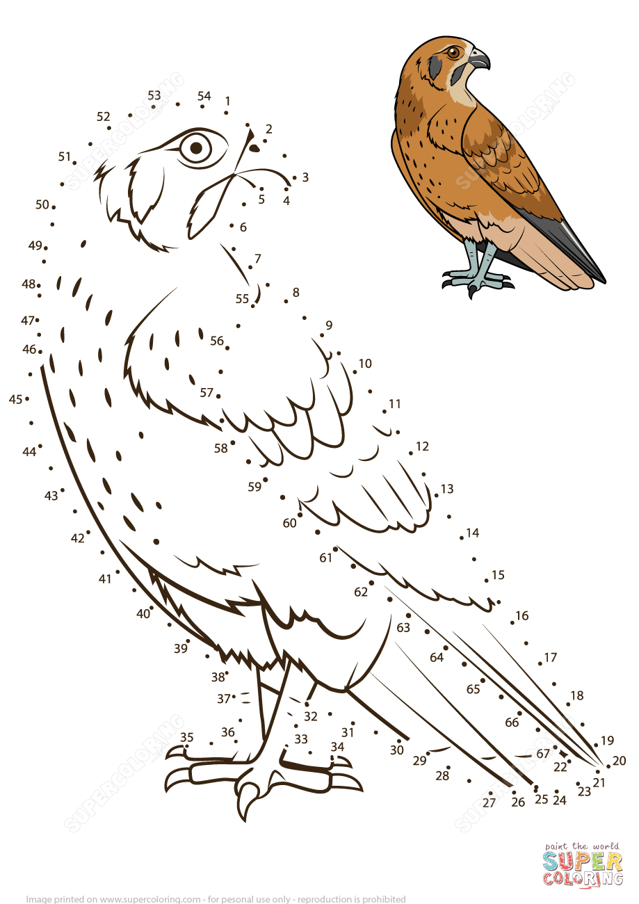 Falcon Bird Super Coloring Coloring pages, Dots free