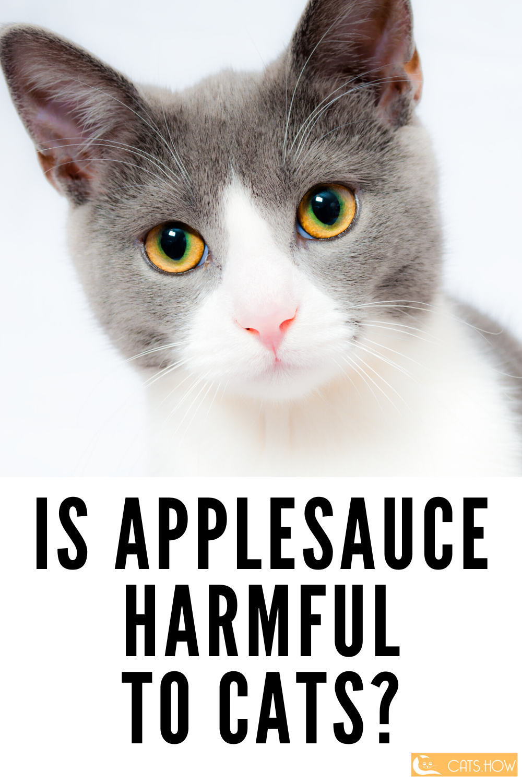 ᐉ Can Cats Eat Applesauce Flea medicine for cats, Cat