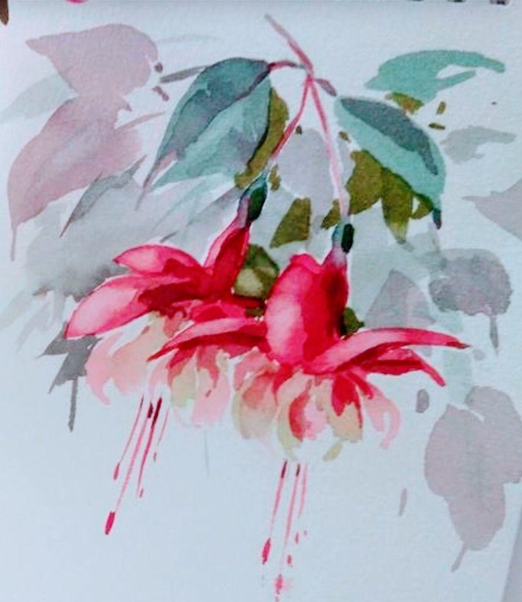 Fuschia Watercolour Watercolor Flowers Paintings Watercolor