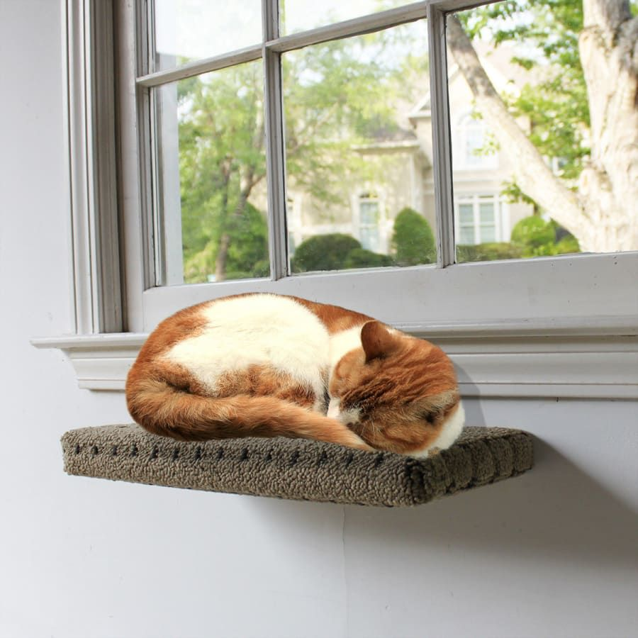 7 steps to a comfy cat shelf your cat will love cat