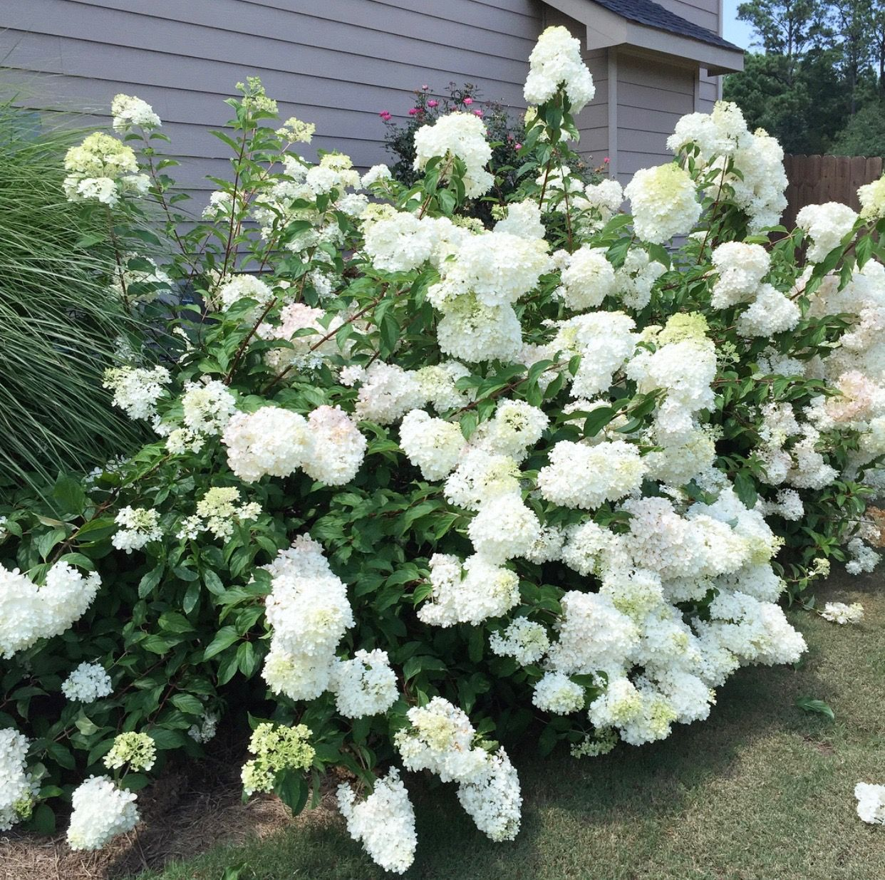 The Best Plants that Grow in Shade plants Pinterest