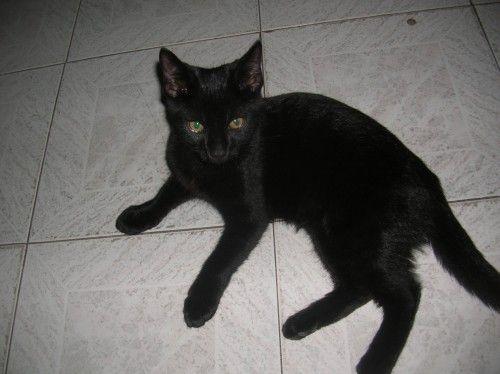 Missing Black Lost Cat Yagoona Nsw Lost Cat Cats Kitten