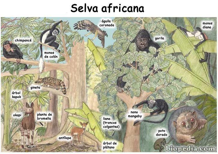 arboles de la sabana africana - Buscar con Google | LA SABANA ...
