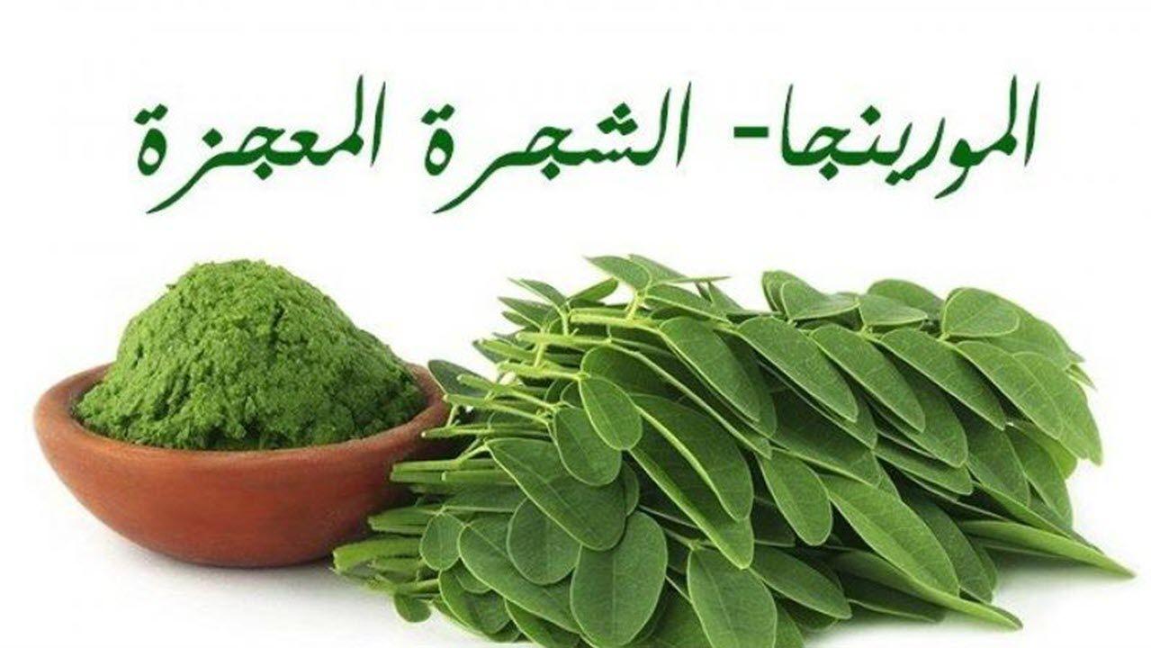 زراعةالمورينجا Herbs Parsley