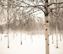 Inspiring picture december, forest, nature, photography, snow. Resolution: 500x333 px. Find the picture to your taste!
