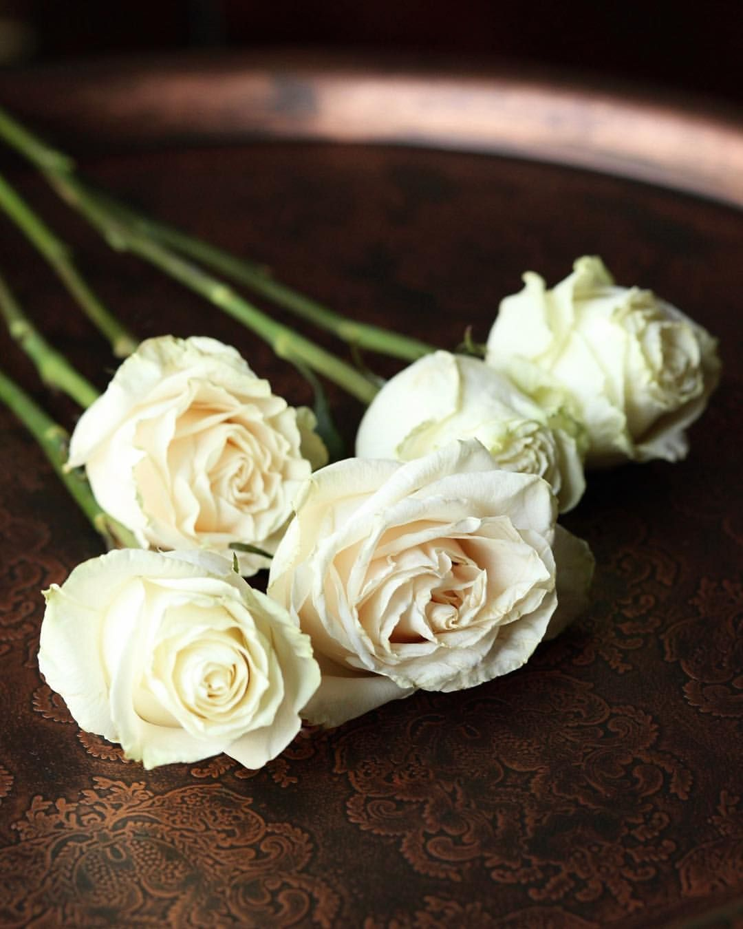 Good Morning Lovers White Roses Make Me Smile I Could Photograph