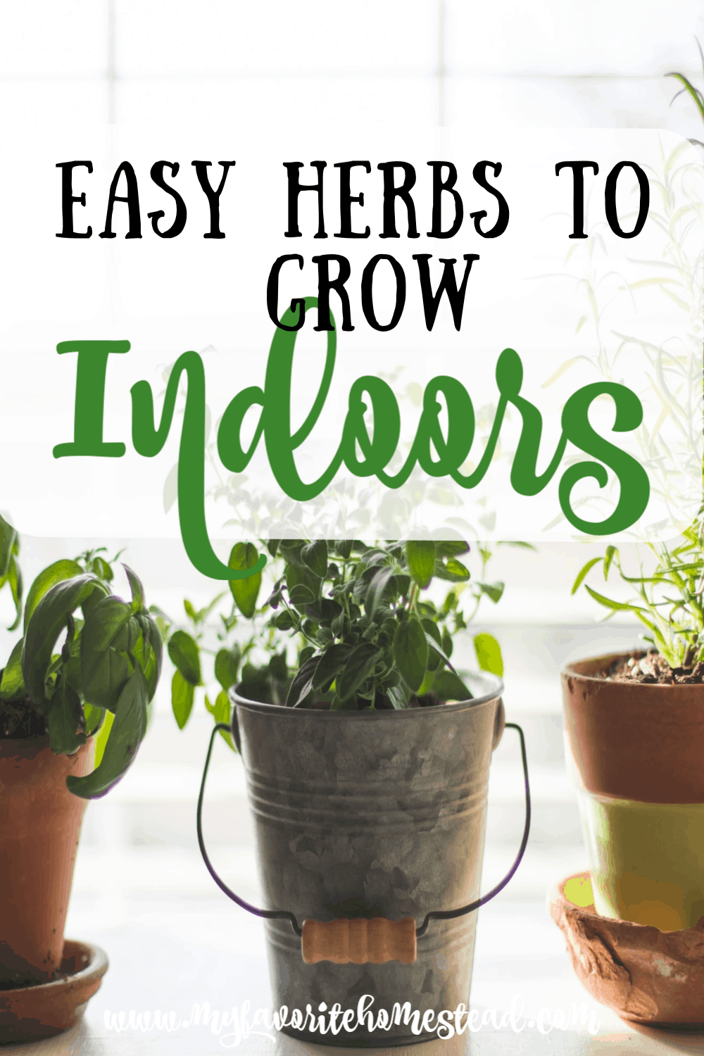 Herb Container Gardening With Images Easy Herbs To 400 x 300