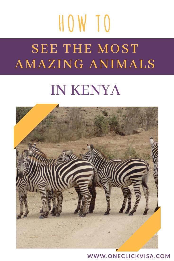 Travel Visa Kenya Africa Travel Kenya Travel Kenya