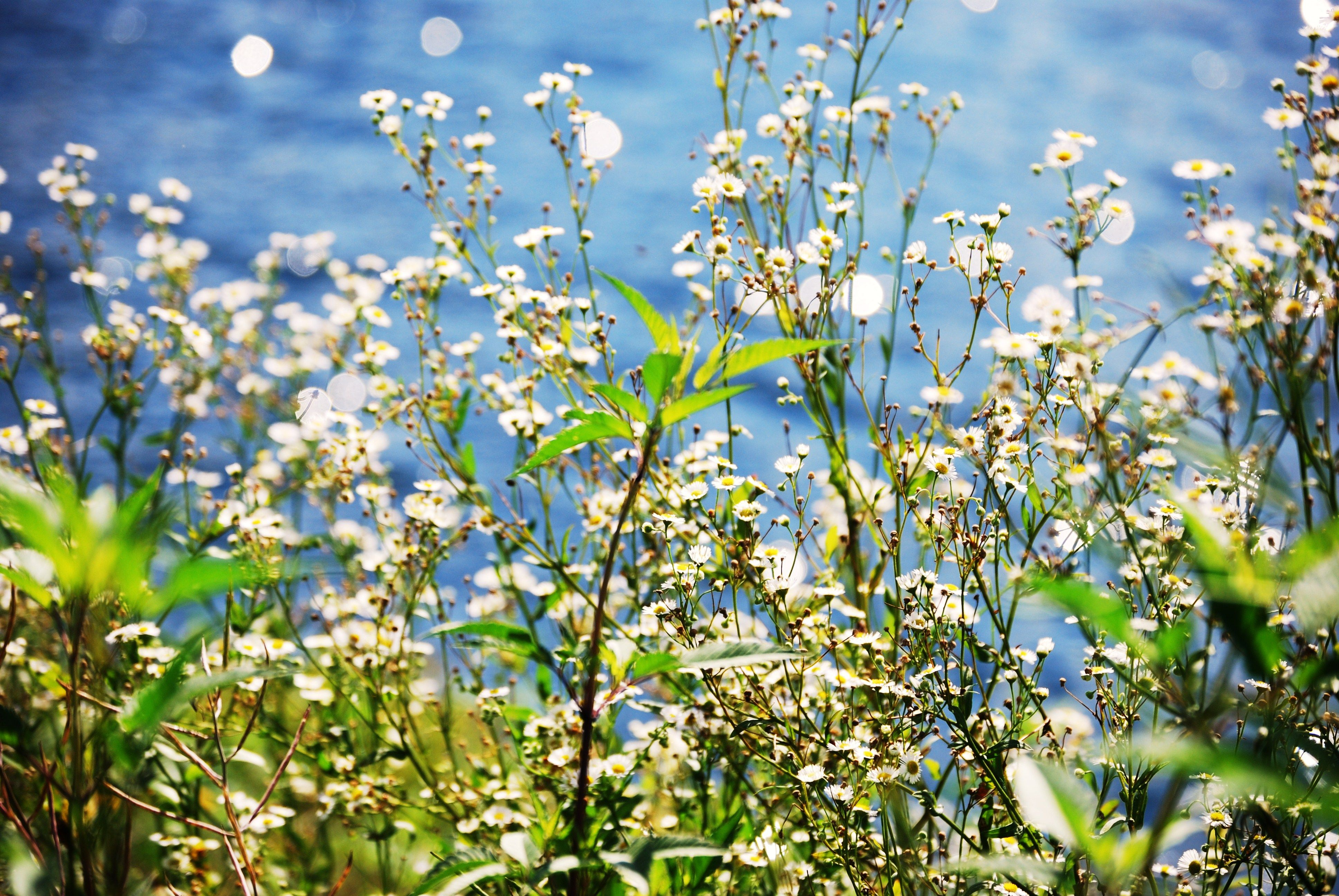 Missing The Summer Days Flowers Nature Blue White Green