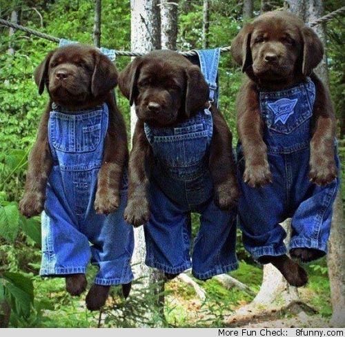 cute dogs wearing clothes