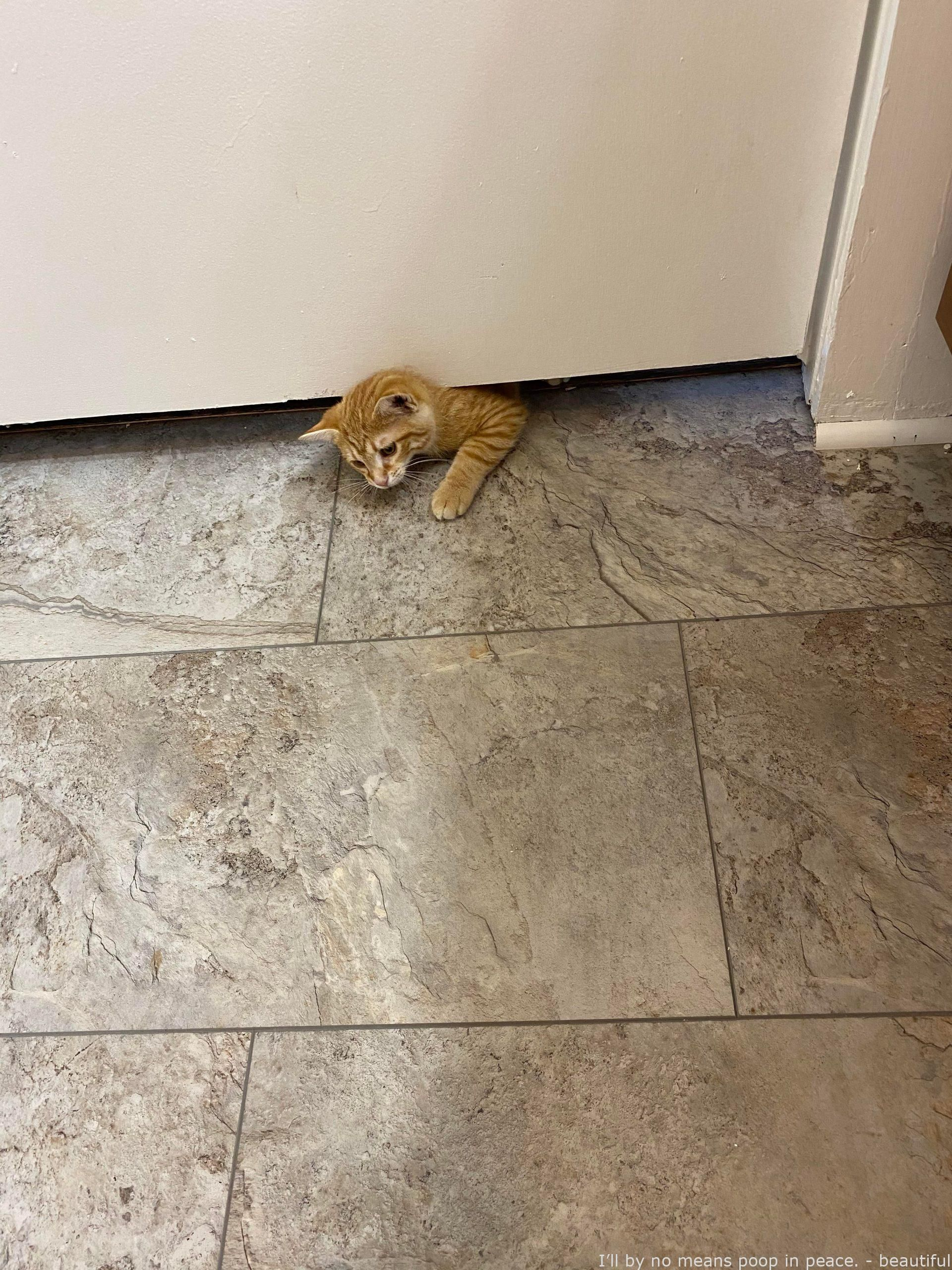 Pin On Beautiful Cat