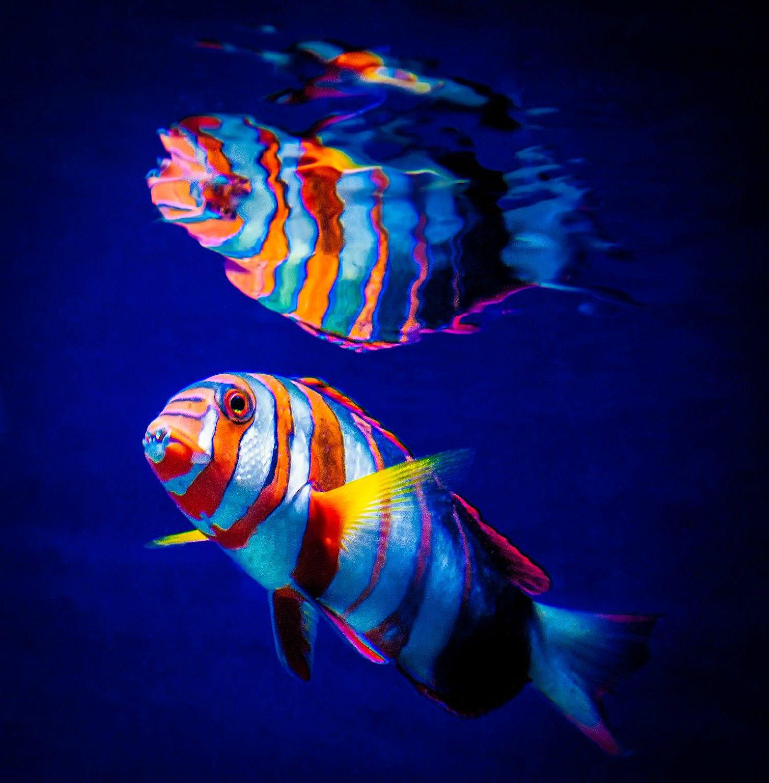 Fish Photo By Photographer Dave Lipchen Water Animals Colorful Fish Marine Fish