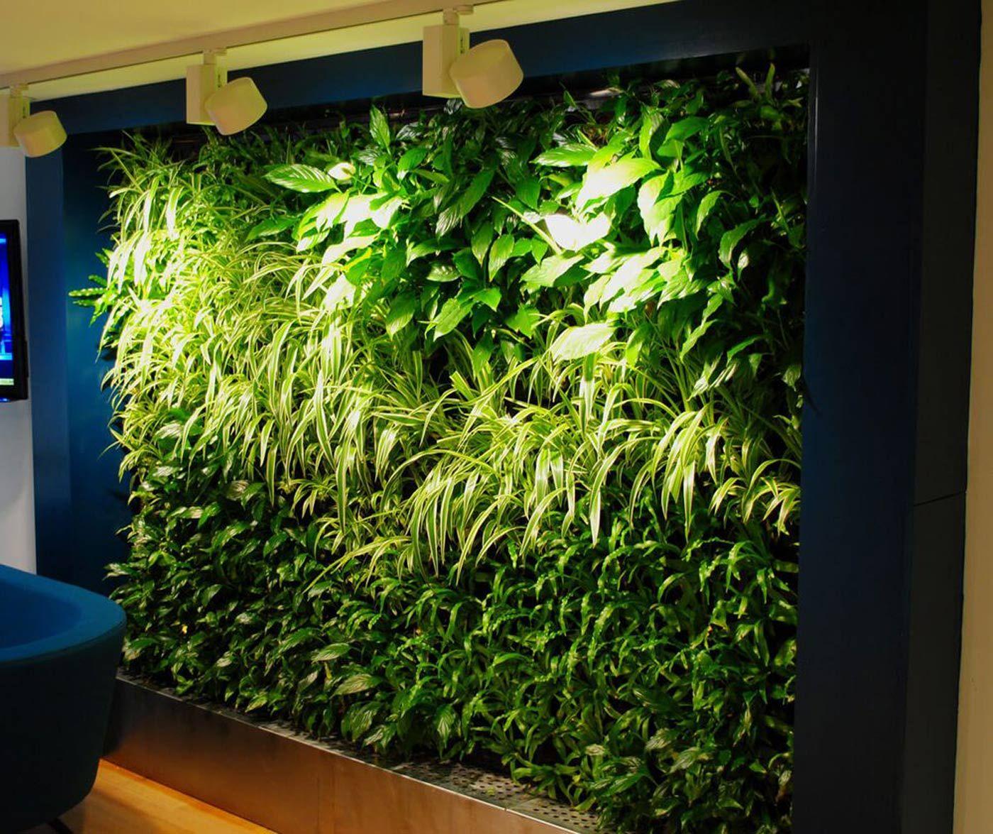 Green Feature Wall Green Wall Vertical Garden Plants