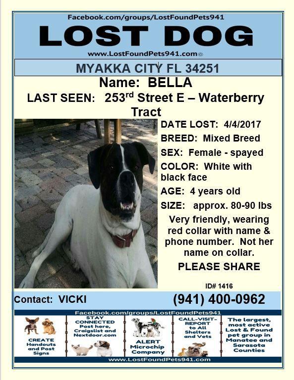 Have You Seen Bella Losing A Dog Myakka City Manatee County