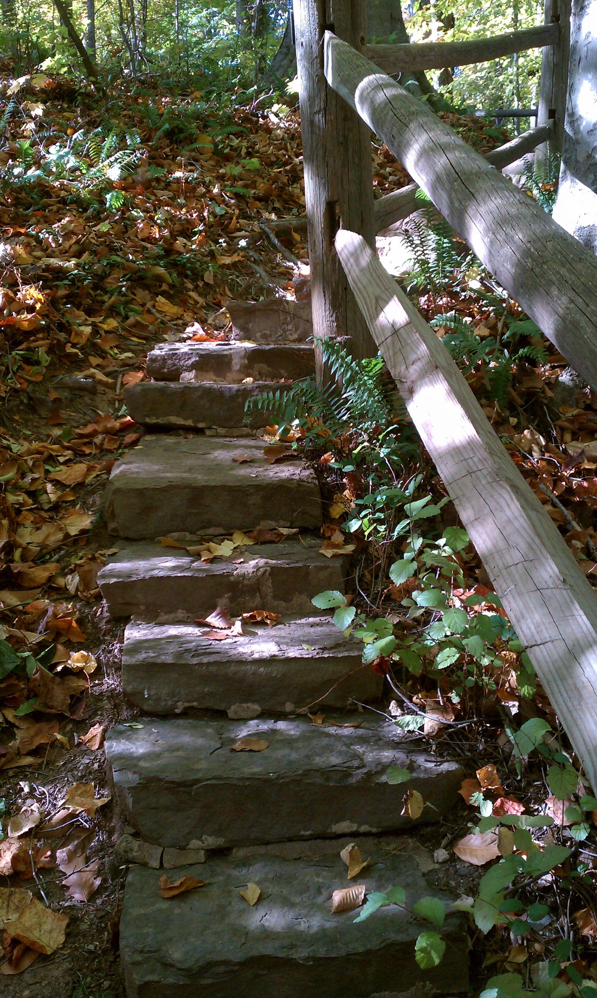 Bog Garden path   Home Landscaping   Pinterest   Garden paths and ...