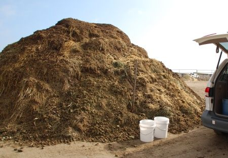 157d381769e18b4fe33d7fb95af271ba - Is Horse Manure Good Fertilizer For Gardens