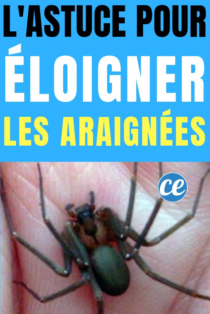 Remede De Grand Mere Contre Les Moucherons Dans La Maison comment Éloigner les araignées à la maison ? | araignée