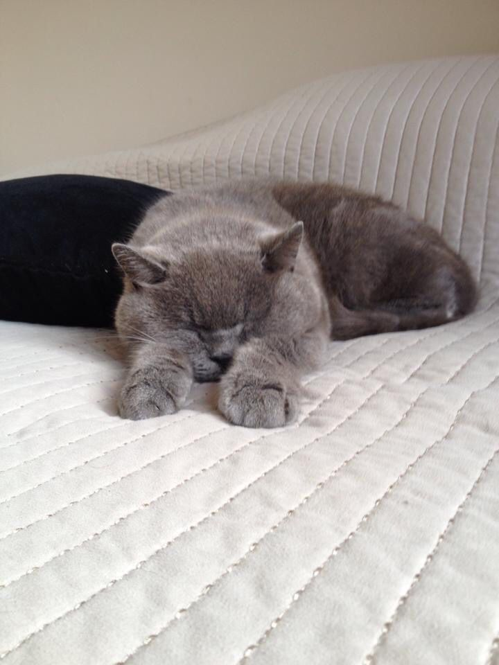 Monty I Miss Him Every Day