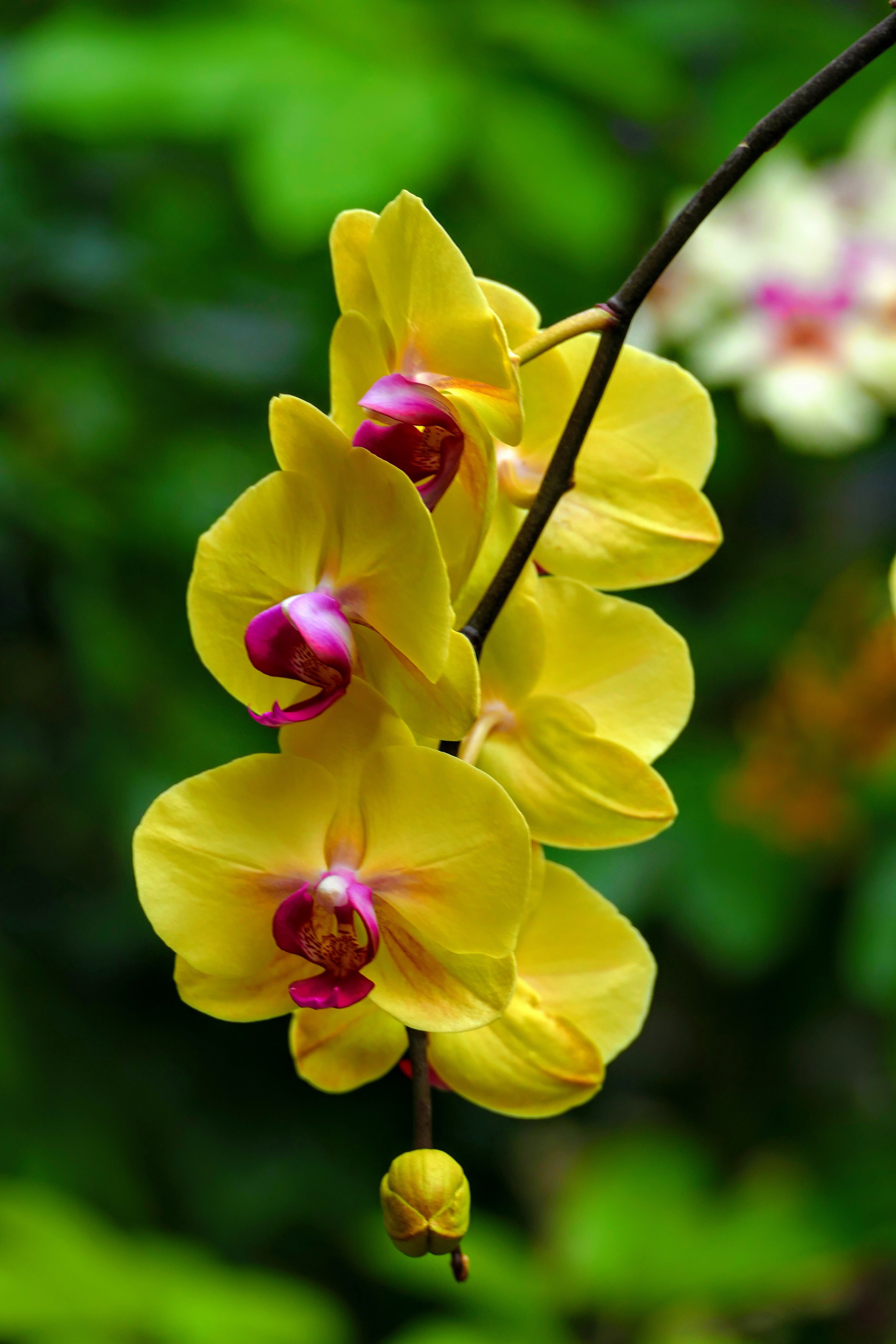 Pin by lorena cano on orquideas pinterest orchid flowers and