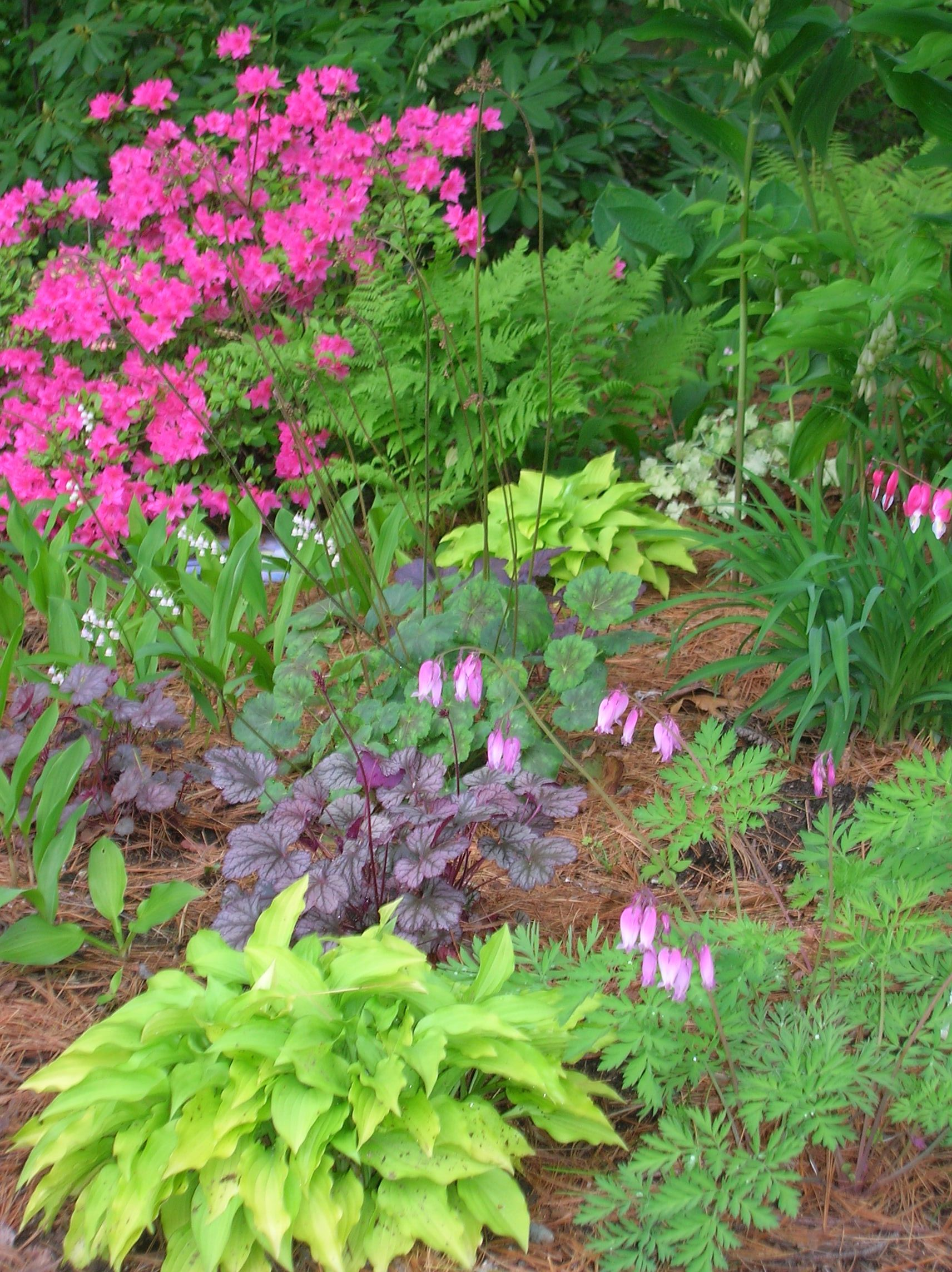 Garden At Heart Plant Profiles Lotus Berthelotii: Pink Azalea, Ferns, Coral Bells, Lily Of The Valley