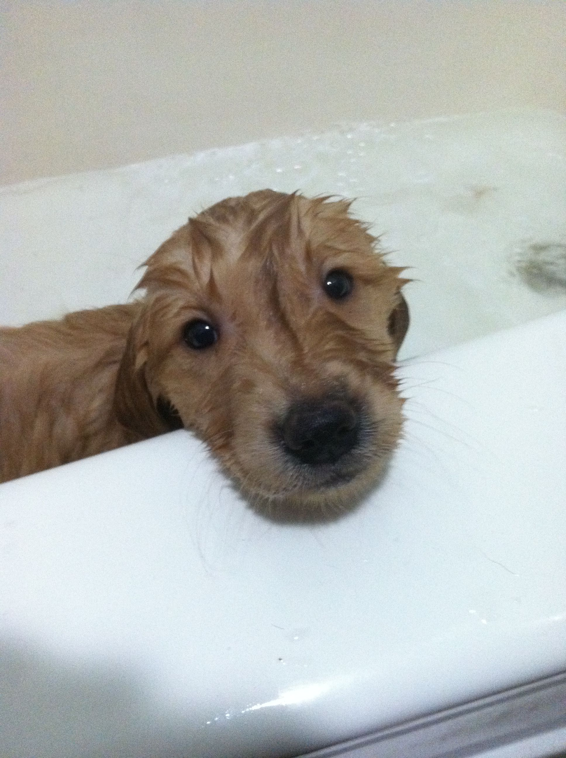 Bauer S First Bath Most Beautiful Dog Breeds Beautiful Dog