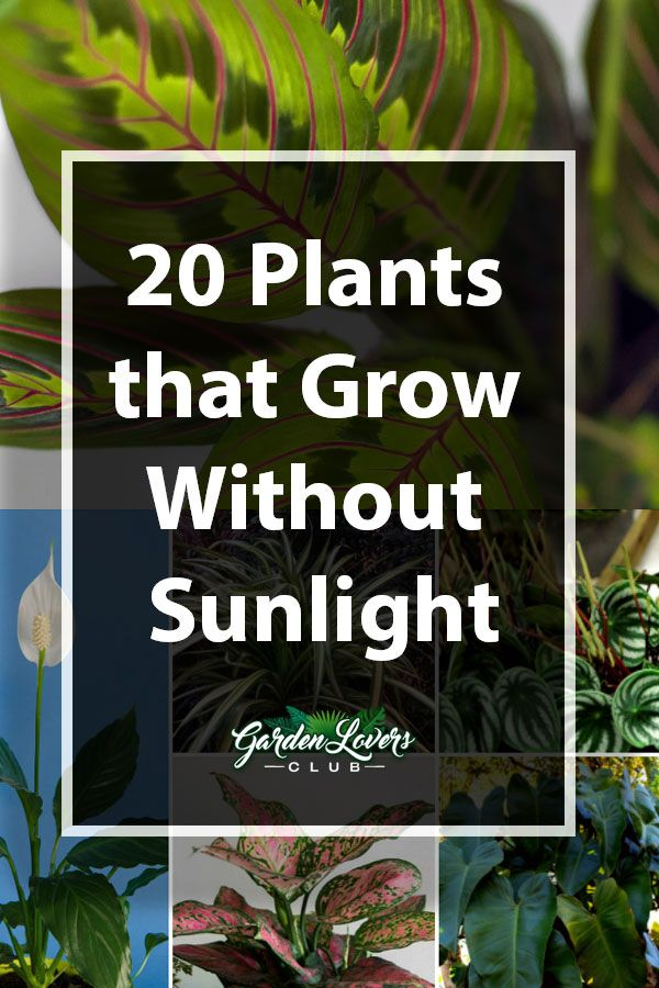 20 Plants that Grow Without Sunlight #outdoorgardens