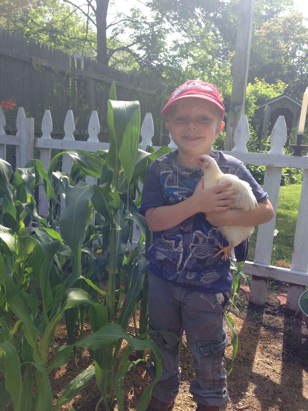 My little farmer, life on a small homestead | To Reap what you sow ...