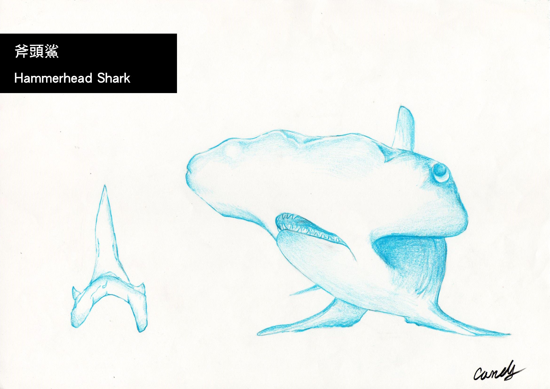 Hammerhead Shark   Sketch_Shark   Pinterest