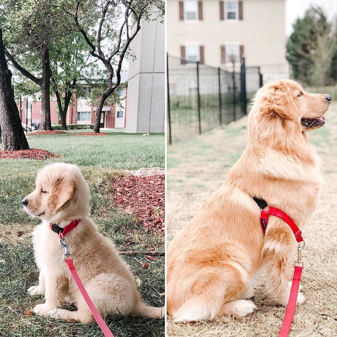 Dj On Instagram Happy National Puppy Day From 2 Months And 8 Months Old Dj To All My Puppy Furiends Love You All Nationa Hot Diggetty Dogs Puppi
