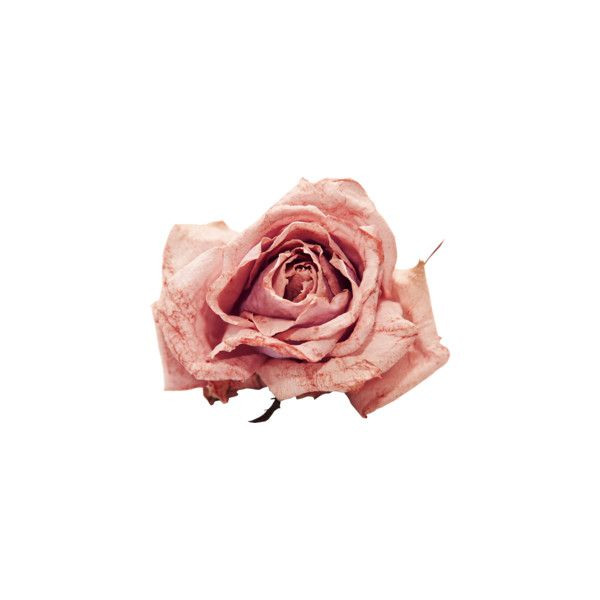 Element21.png ❤ liked on Polyvore featuring flowers, fillers, decor, floral and natur