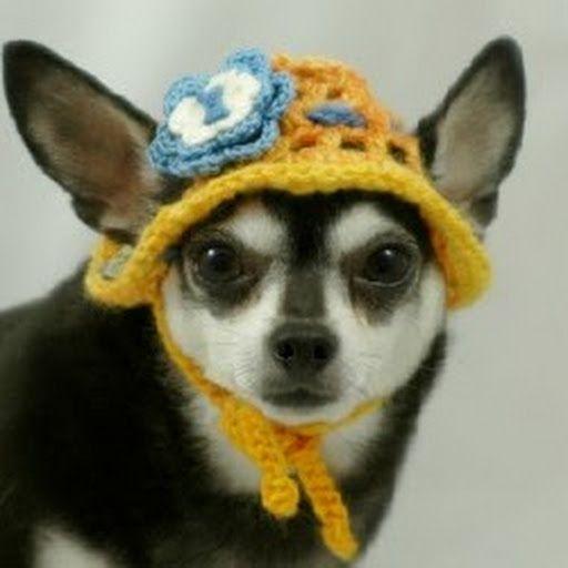 Ami Chihuahua Crochet Pattern   dogs   Pinterest   Hunde und Tier