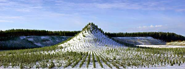 """Agnes Denes, """"Tree Mountain - A Living Time Capsule - 11,000 Trees - 11,000 People - 400 Years"""", winter view, Yljrvi, Finland, planted in 1996."""