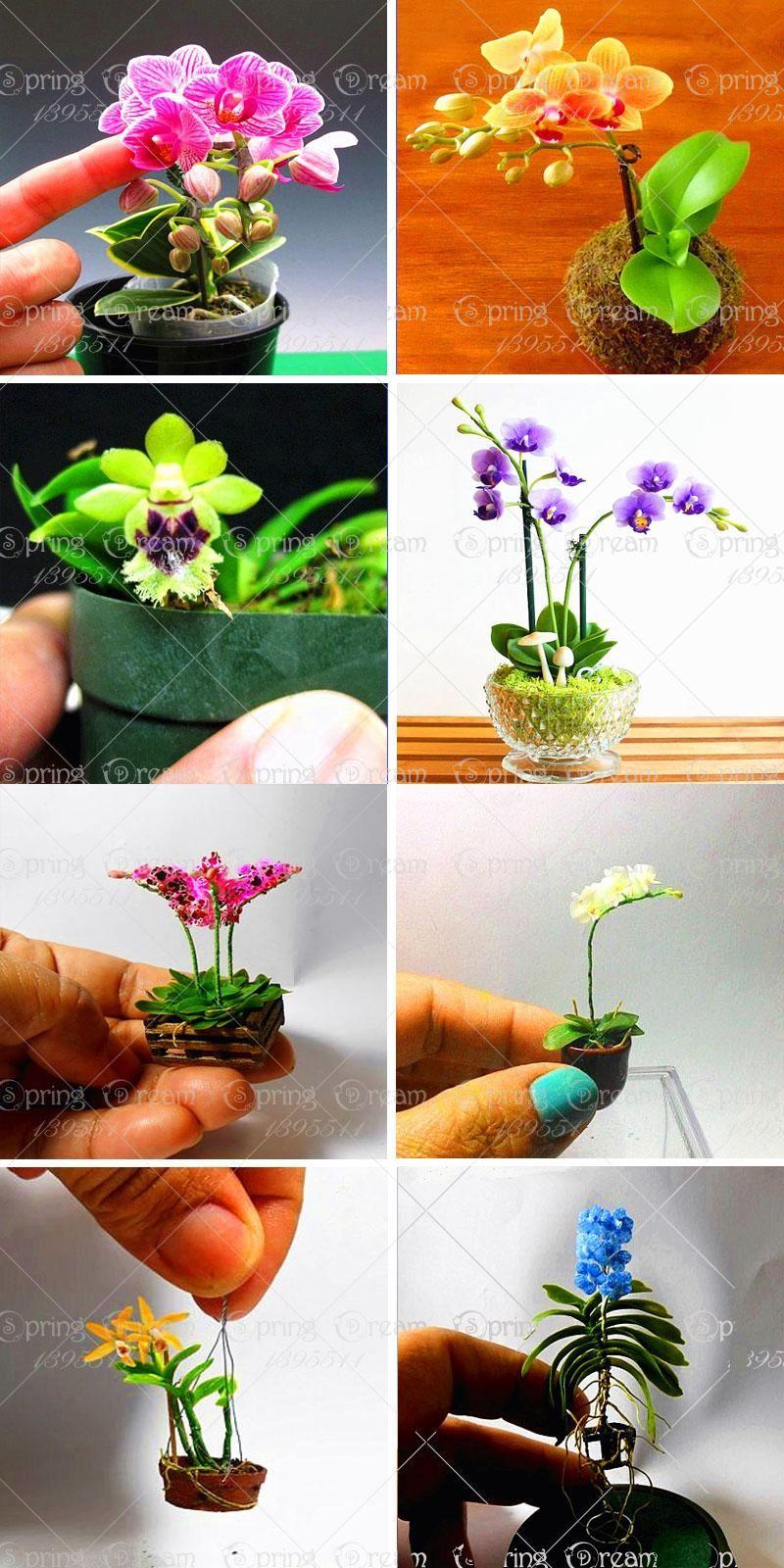 Visit to buy pcsbag bonsai orhid seedsphalaenopsis orchid
