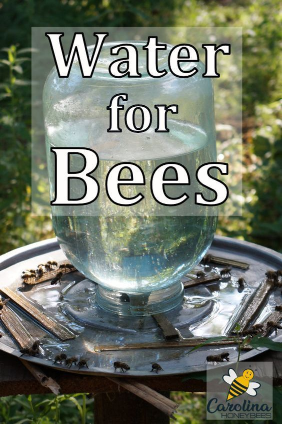 You can make a big impact for the honey bees and other pollinators visiting your garden.  Consider a water feature or other way to provide water for bees this year. #carolinahoneybees #pollinators #beegardens