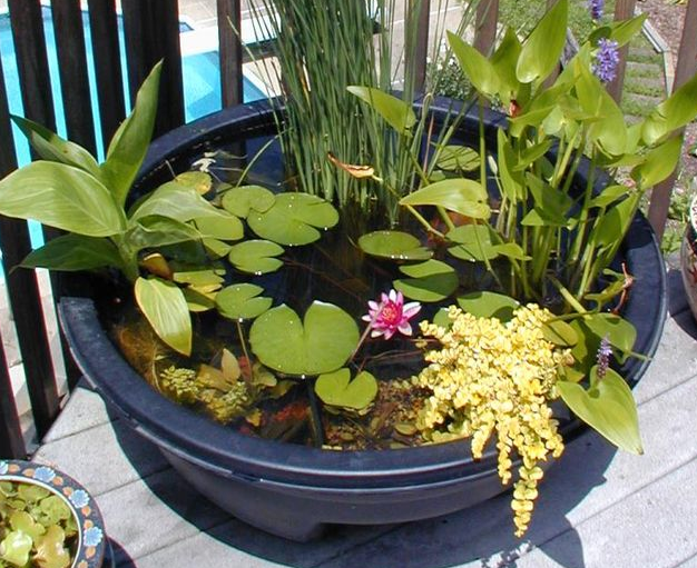 DIY Container Water Garden  | Best Home Depot Hacks and Homesteading Tips & Tricks at http://pioneersettler.com/home-depot-hacks-homesteading-tips-tricks
