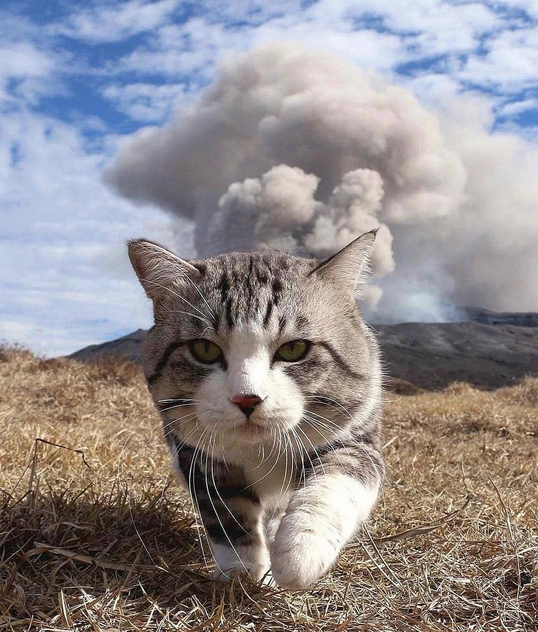 Yankichi The Cat Walking Away From The Erupting Aso Volcano In Japan Photo By Noraneko Nyankichi Animalonplane Cute Cats Photos Animals Cute Cats