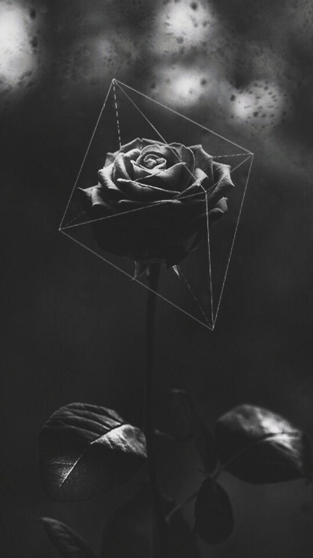 Black Rose Darkness And Beauty Walpaper Blog En 2020 Fond D Ecran Telephone Photographie Monochrome Images Aleatoires