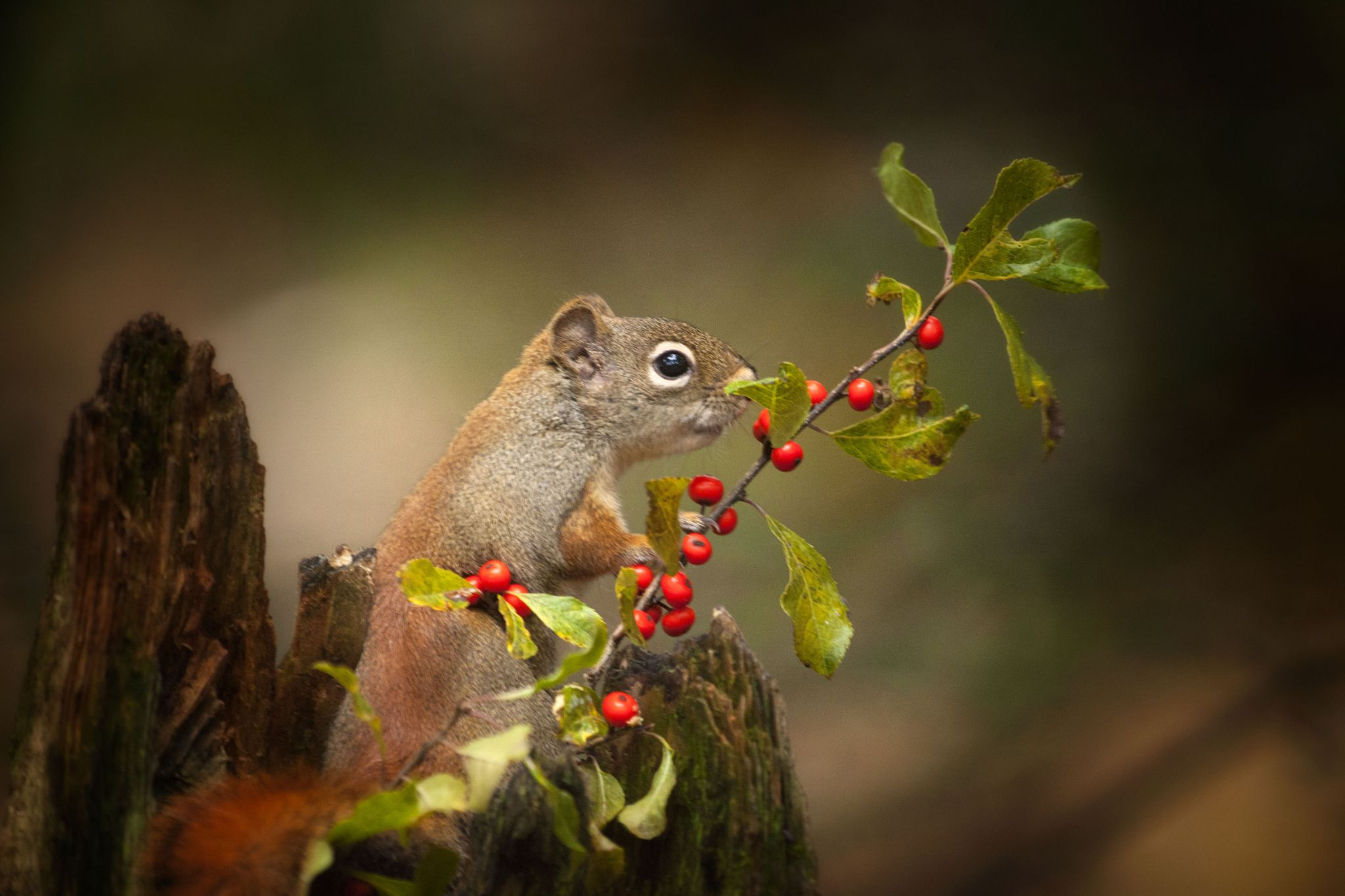 The wildlife by Andre Villeneuve on 500px