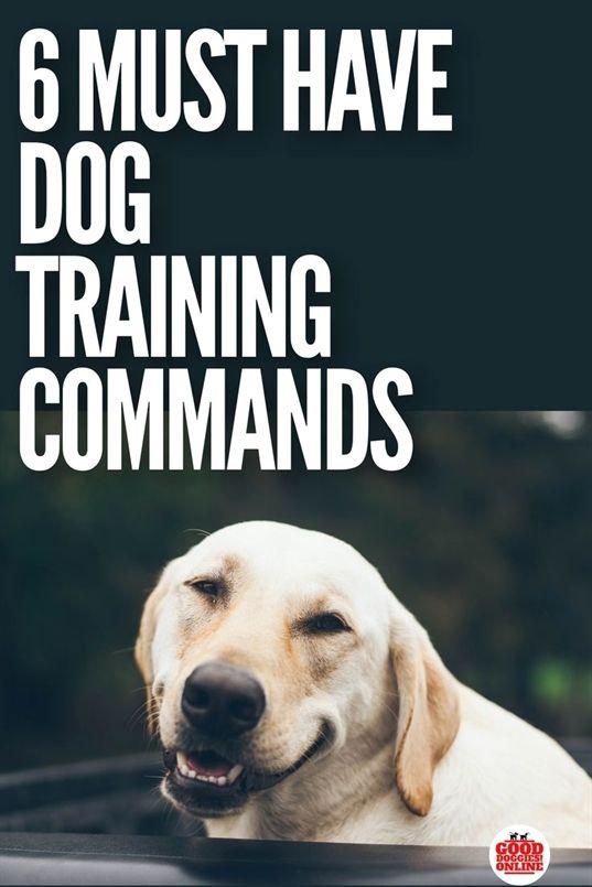 Dog Training Grand Rapids Dog Training On Leash Zak George S