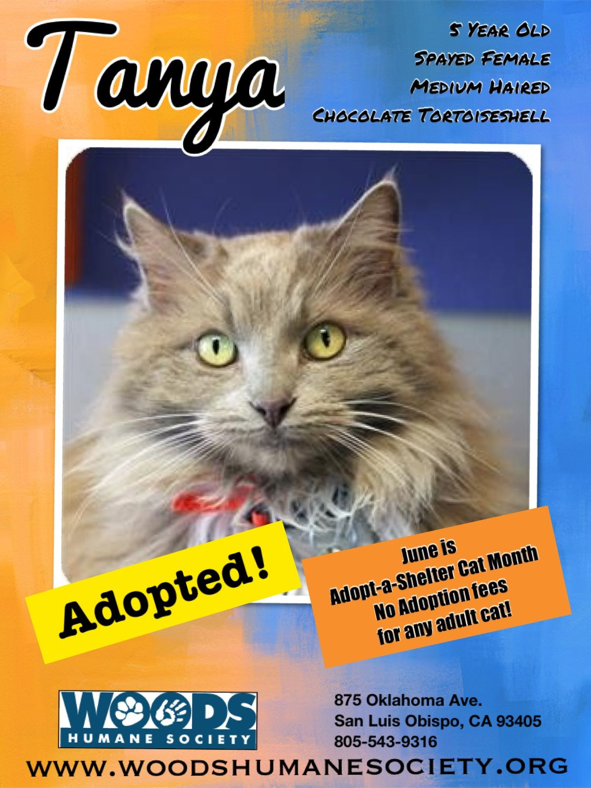Adopted! June is AdoptaShelter Cat Month No Adoption