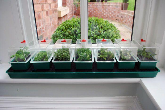Super 7 Self Watering Propagator Self Watering Seed Starting Kits Sutton Seeds