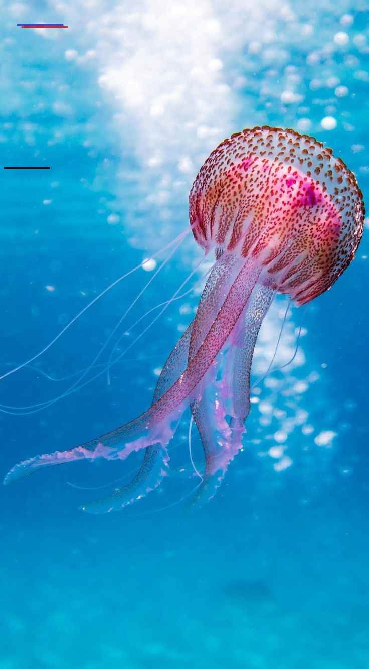 Picture of a beautiful jellyfish Picture of a beautiful jellyfish. #Sea #Animals #SeaCreatures #Ocean #Jellyfish<br> Picture of a beautiful jellyfish.