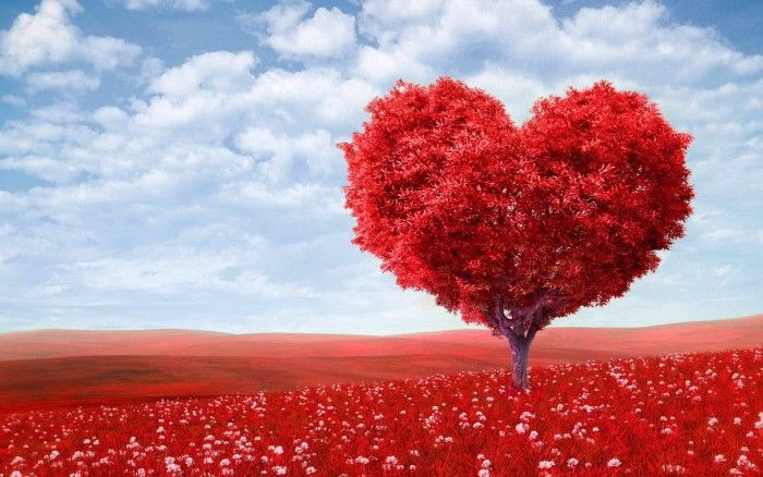 Red Heart Nature Beauty Scenery Landscape Conand Repair Love Wallpaper Heart Tree Valentines
