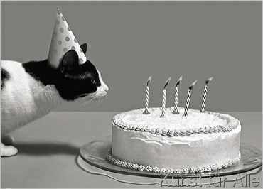 Steven+Puetzer+-+Der+Geburtstag+der+Katze