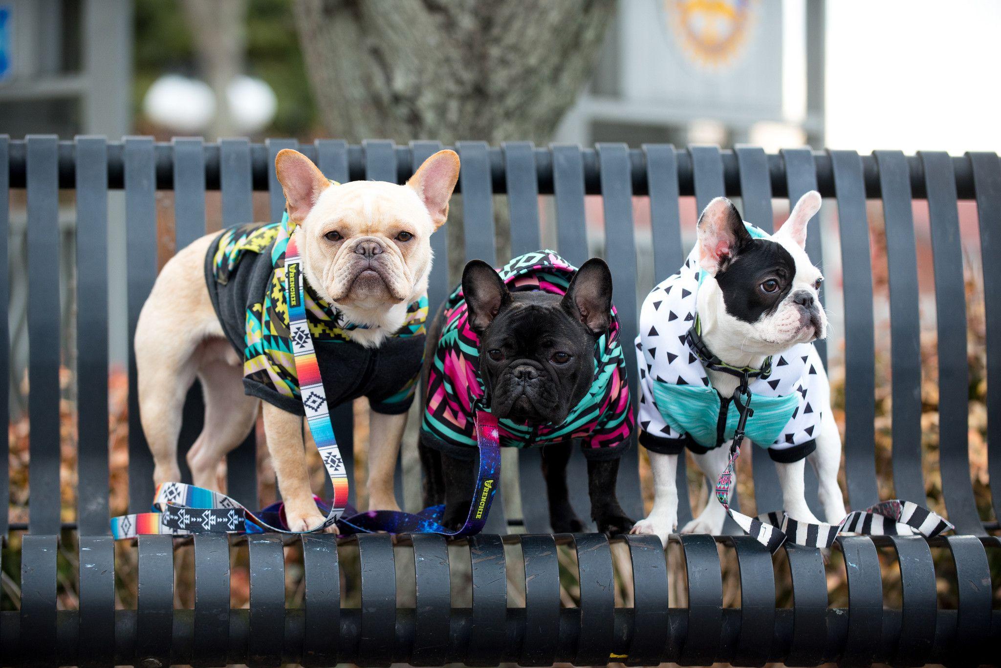 Frenchie Bulldog Harnesses Collars Leashes More Bulldog