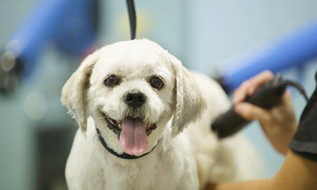 A dog being groomed at the Pets at Home superstore in Stockport, Greater Manchester. The chain has 360 stores and a string of veterinary sur...