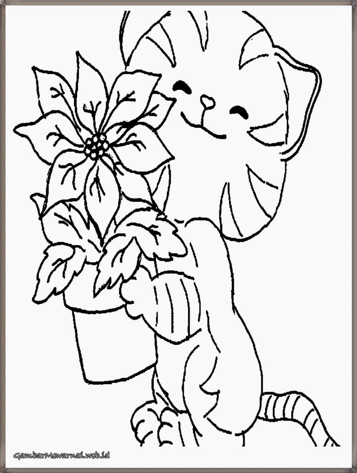 Gambar Bintang Kucing Hitam Putih Untuk Diwarnai