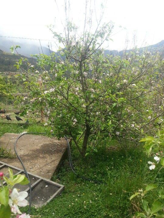 Mi jardin prestado